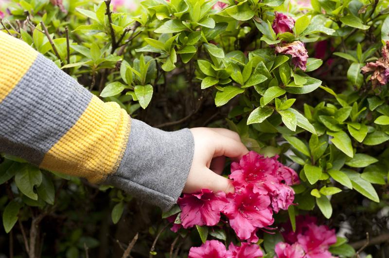 made by joel » flamenco flower dolls, Beautiful flower